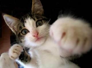 Cat39.jpg