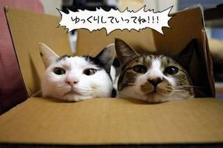 Cat42.jpg