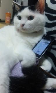 Cat81.jpg