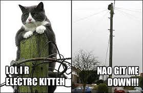 Cat82.jpg