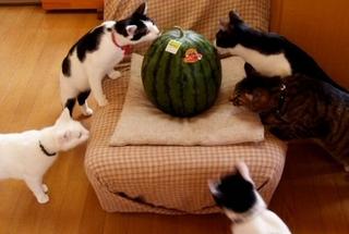 Cat93.jpeg