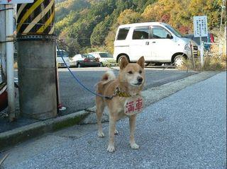 Dog24.jpg