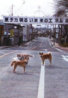 Dog81.jpg