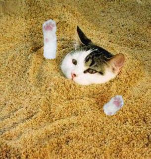 Cat101.jpg