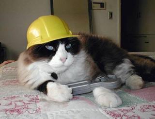 Cat102.jpg