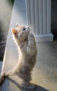 Cat47.jpg
