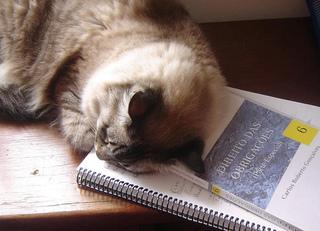 Cat50.jpg