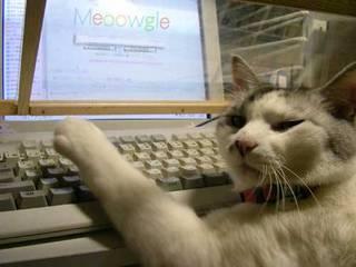 Cat85.jpg