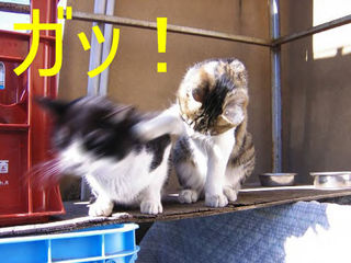 Cat98.jpg